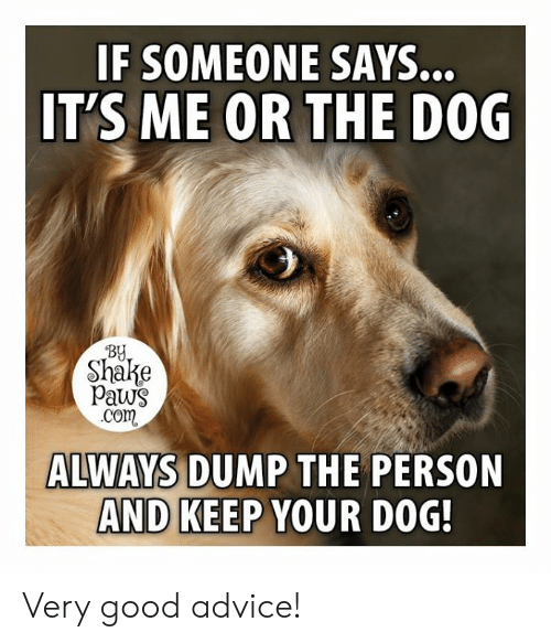 Advice, Memes, and Good: IF SOMEONE  IT'S ME OR THE D0G  SAYS..  BY  Shake  paws  com  ALWAYS DUMP THE PERSON  AND KEEP YOUR DOG Very good advice!