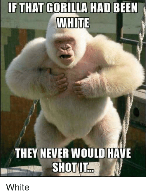 Reddit, White, and Never: IF THAT GORILLA HAD BEEN  WHITE  THEY NEVER WOULD HAVE White