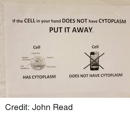 Memes, 🤖, and Cell: If the CELL in your hand DOES NOT have CYTOPLASM  PUT IT AWAY.  Cell  Cell  Cytoplasm  Nuclear  membrane  Nucleus  Cel  membrane  Ribosomes  HAS CYTOPLASM  DOES NOT HAVE CYTOPLASM Credit: John Read