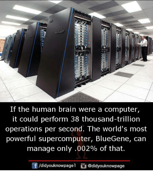 Brains, Memes, and Brain: If the human brain were a computer,  it could perform 38 thousand-trillion  operations per second. The world's most  powerful supercomputer, BlueGene, can  manage only .002% of that.  /didyouknowpagel @didyouknowpage