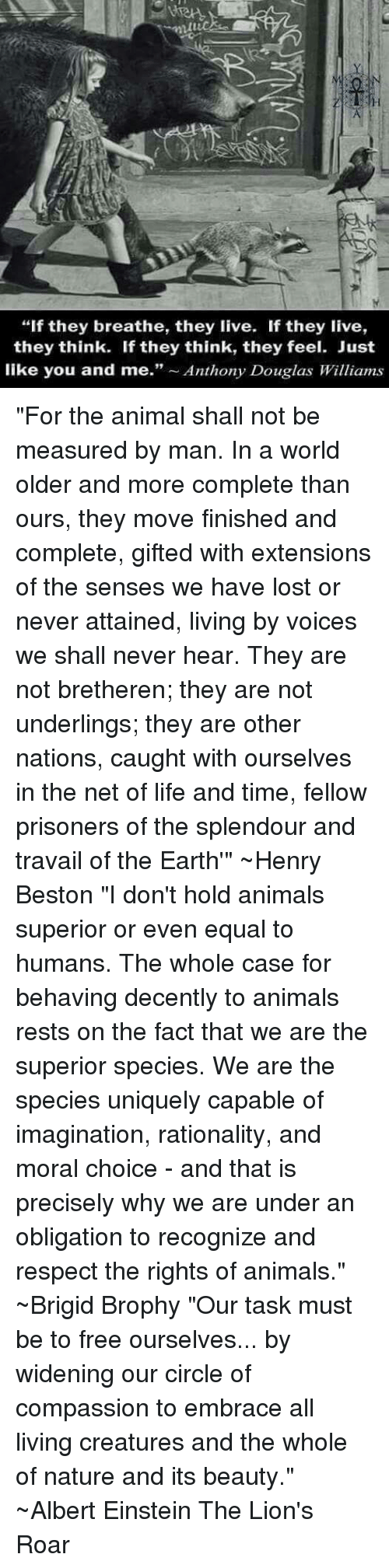 """Albert Einstein, Animals, and Life: """"If they breathe, they live. If they live,  they think. If they think, they feel. Just  like you and me  Anthony Douglas Williams """"For the animal shall not be measured by man.  In a world older and more complete than ours, they move finished and complete, gifted with extensions of the senses we have lost or never attained, living by voices we shall never hear. They are not bretheren; they are not underlings; they are other nations, caught with ourselves in the net of life and time, fellow prisoners of the splendour and travail of the Earth'"""" ~Henry Beston  """"I don't hold animals superior or even equal to humans. The whole case for behaving decently to animals rests on the fact that we are the superior species. We are the species uniquely capable of imagination, rationality, and moral choice - and that is precisely why we are under an obligation to recognize and respect the rights of animals."""" ~Brigid Brophy  """"Our task must be to free ourselves... by widening our circle of compassion to embrace all living creatures and the whole of nature and its beauty."""" ~Albert Einstein The Lion's Roar"""