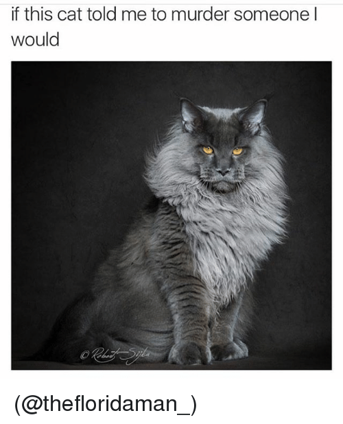 Funny, Meme, and Murder: if this cat told me to murder someone I  would (@thefloridaman_)