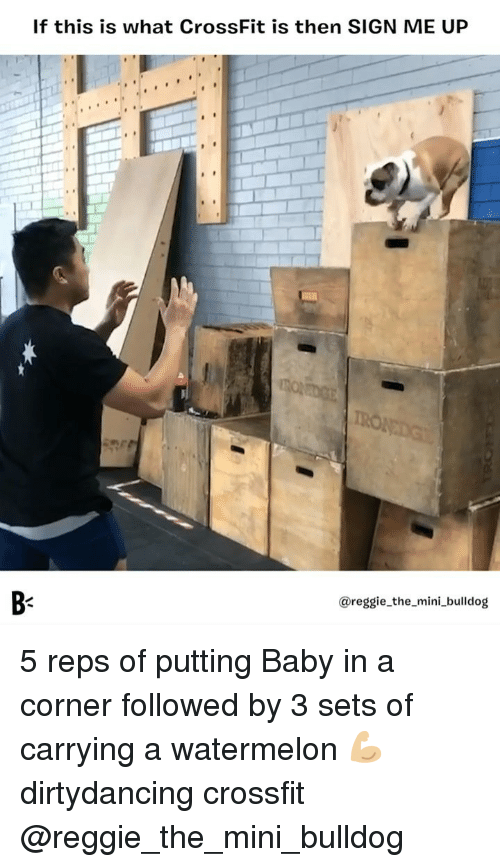 Memes, Reggie, and Bulldog: If this is what CrossFit is then SIGN ME UP  B-  @reggie_the_mini_bulldog 5 reps of putting Baby in a corner followed by 3 sets of carrying a watermelon 💪🏼 dirtydancing crossfit @reggie_the_mini_bulldog