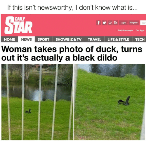 Dildo, Life, and News: If this isn't newsworthy, I don't know what is  DAILY  f GLogin Register  Sear  Daily Horoscope  Our Apps  HOME  NEWS  SPORTSHOWBIZ & TV  TRAVEL  LIFE & STYLE  TECH  Woman takes photo of duck, turns  out it's actually a black dildo