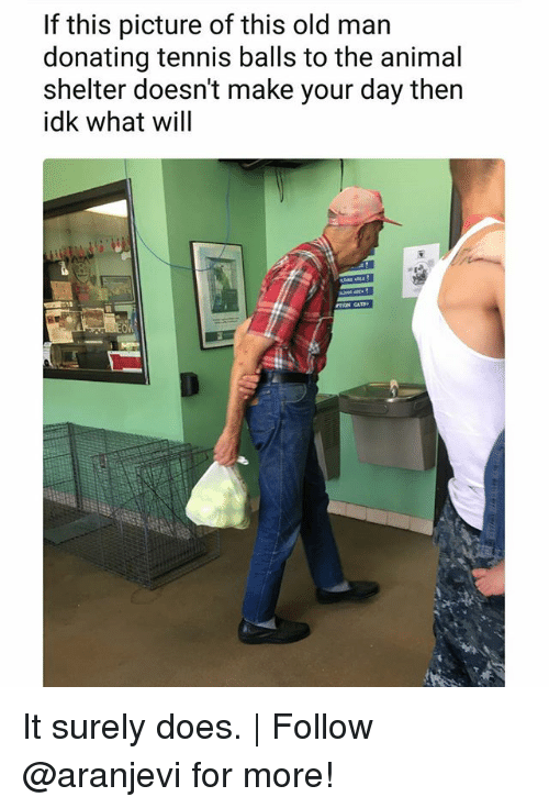 Memes, Old Man, and Animal: If this picture of this old man  donating tennis balls to the animal  shelter doesn't make your day then  idk what will It surely does. | Follow @aranjevi for more!