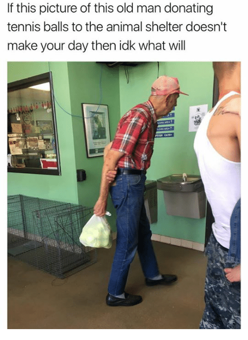 Old Man, Animal, and Animal Shelter: If this picture of this old man donating  tennis balls to the animal shelter doesn't  make your day then idk what will