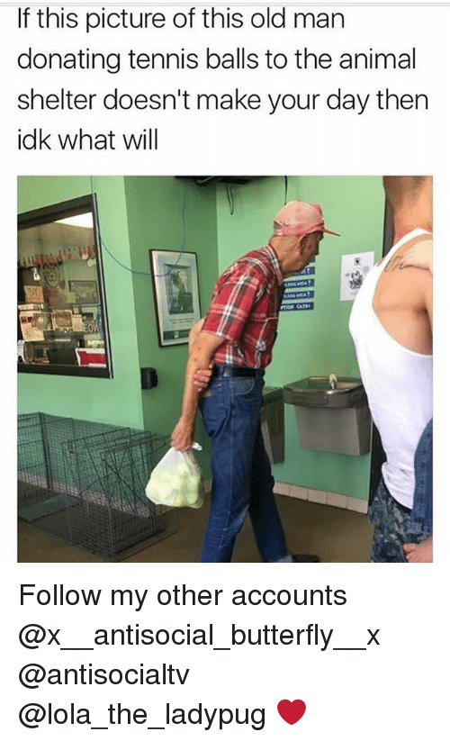 Memes, Old Man, and Animal: If this picture of this old man  donating tennis balls to the animal  shelter doesn't make your day then  idk what will Follow my other accounts @x__antisocial_butterfly__x @antisocialtv @lola_the_ladypug ❤️