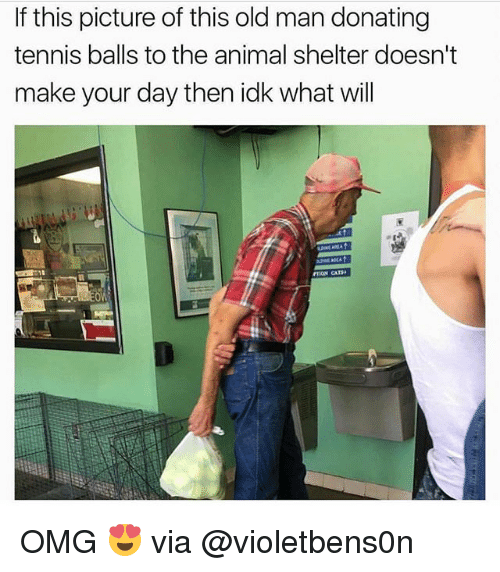 Memes, Old Man, and Omg: If this picture of this old man donating  tennis balls to the animal shelter doesn't  make your day then idk what will OMG 😍 via @violetbens0n