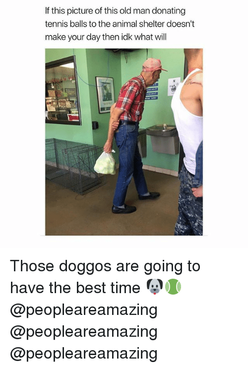 Memes, Old Man, and Animal: If this picture of this old man donating  tennis balls to the animal shelter doesn't  make your day then idk what will Those doggos are going to have the best time 🐶🎾 @peopleareamazing @peopleareamazing @peopleareamazing
