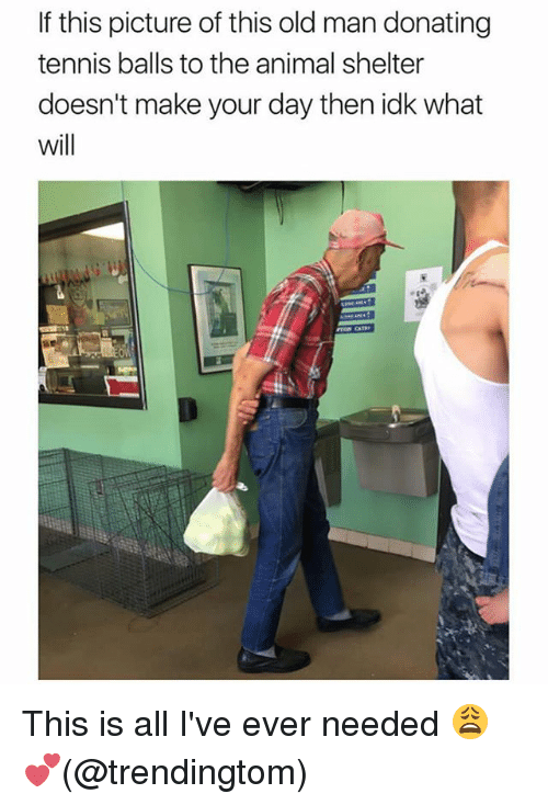 Memes, Old Man, and Animal: If this picture of this old man donating  tennis balls to the animal shelter  doesn't make your day then idk what  will This is all I've ever needed 😩💕(@trendingtom)