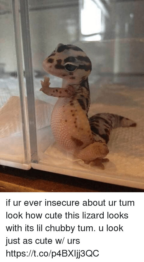 Cute, Girl Memes, and How: if ur ever insecure about ur tum look how cute this lizard looks with its lil chubby tum. u look just as cute w/ urs https://t.co/p4BXIjj3QC