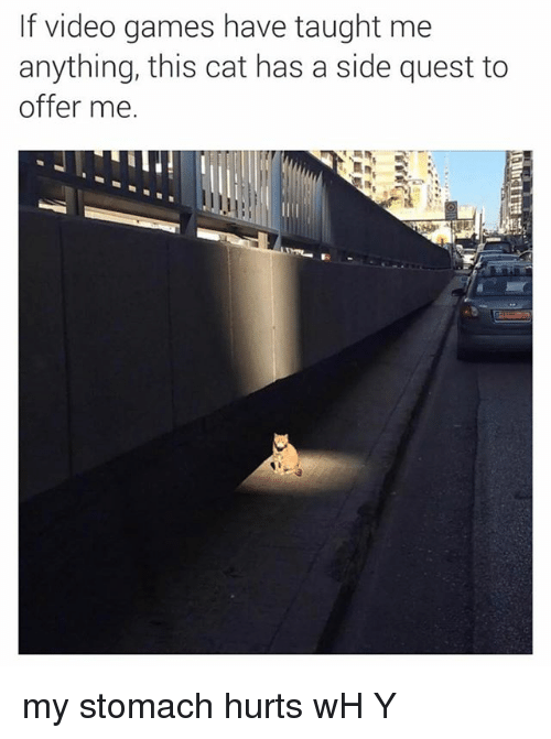 Memes, Video Games, and Games: If video games have taught me  anything, this cat has a side quest to  offer me. my stomach hurts wH Y