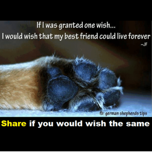 If Was Granted One Wish I Would Wish That My Best Friend Could Live