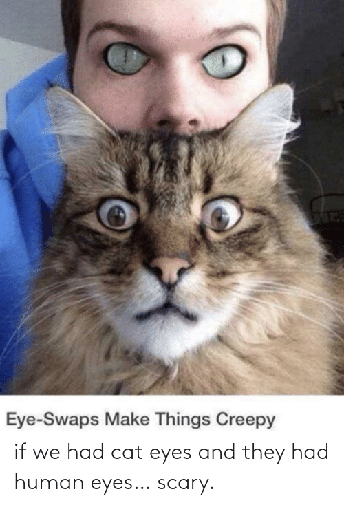 Cat, Human, and They: if we had cat eyes and they had human eyes… scary.