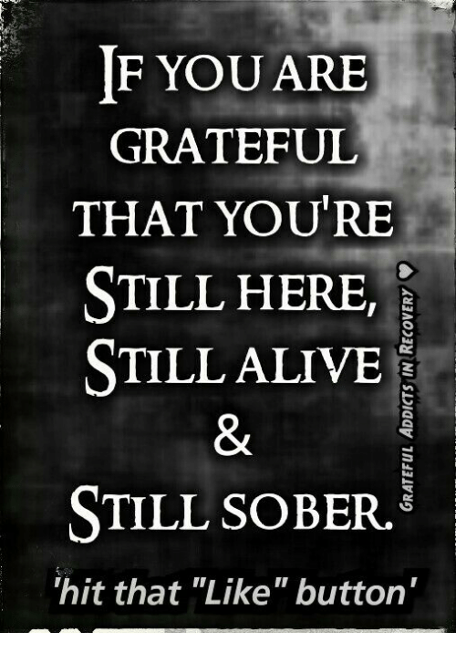 if you are grateful that you re still here still alive still sober rh me me