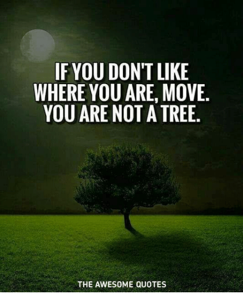 If You Dont Like Where You Are Move You Are Not A Tree The Awesome