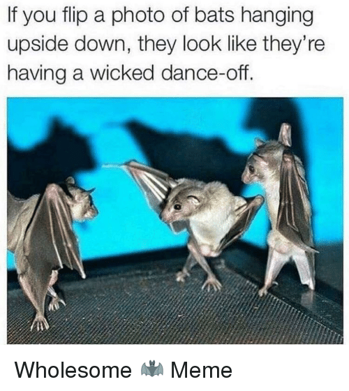 Meme, Wicked, and Wholesome: If you flip a photo of bats hanging  upside down, they look like they're  having a wicked dance-off. Wholesome 🦇 Meme