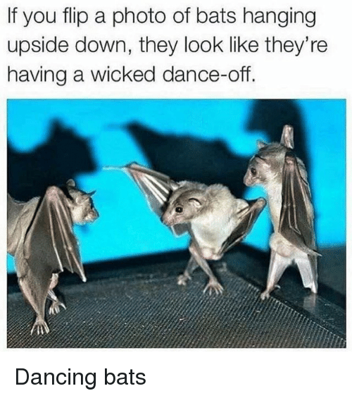 if you flip a photo of bats hanging upside down they look like they