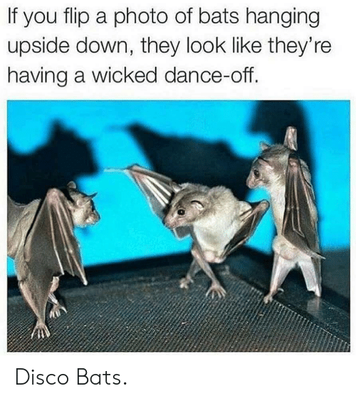 Wicked, Dance, and Disco: If you flip a photo of bats hanging  upside down, they look like they're  having a wicked dance-off. Disco Bats.