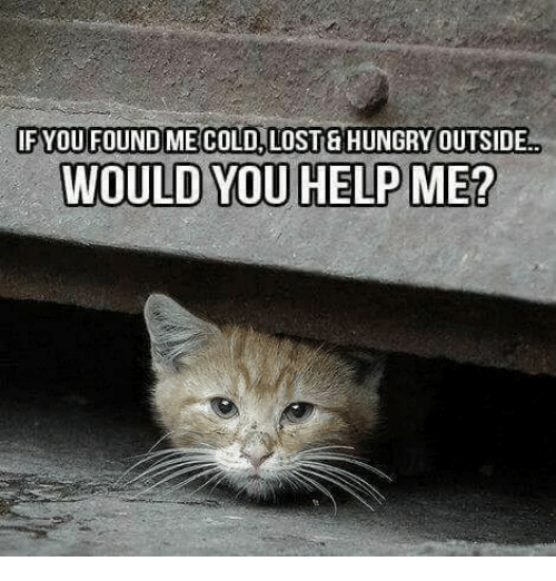 Hungry, Memes, And Lost: IF YOU FOUND ME COLD, LOSTu0026 HUNGRY OUTSIDE