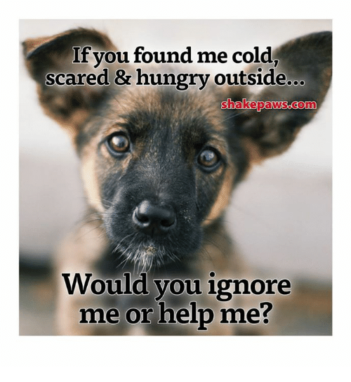 If You Found Me Cold Scared & Hungry Outside Would You