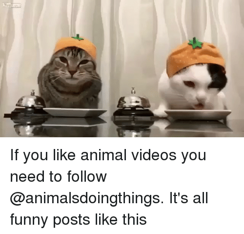 Funny, Videos, and Animal: If you like animal videos you need to follow @animalsdoingthings. It's all funny posts like this