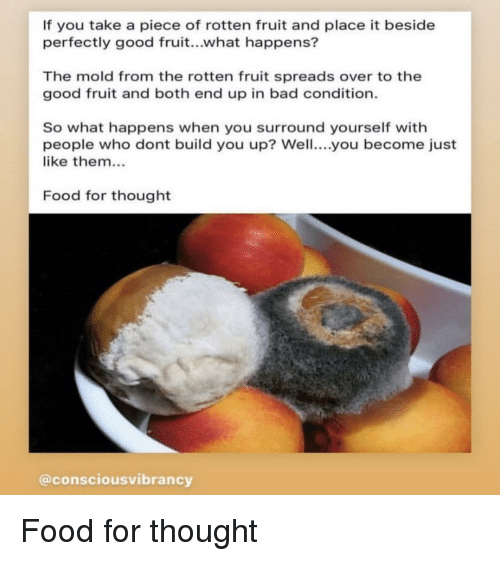 If You Take a Piece of Rotten Fruit and Place It Beside