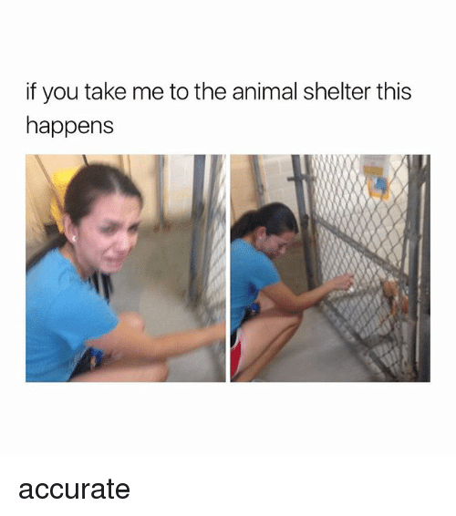Animal, Animal Shelter, and Girl Memes: if you take me to the animal shelter this  happens accurate
