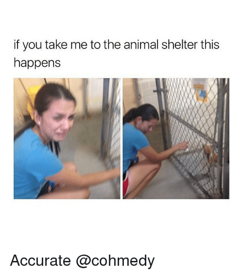 Animal, Animal Shelter, and Shelter: if you take me to the animal shelter this  happens Accurate @cohmedy