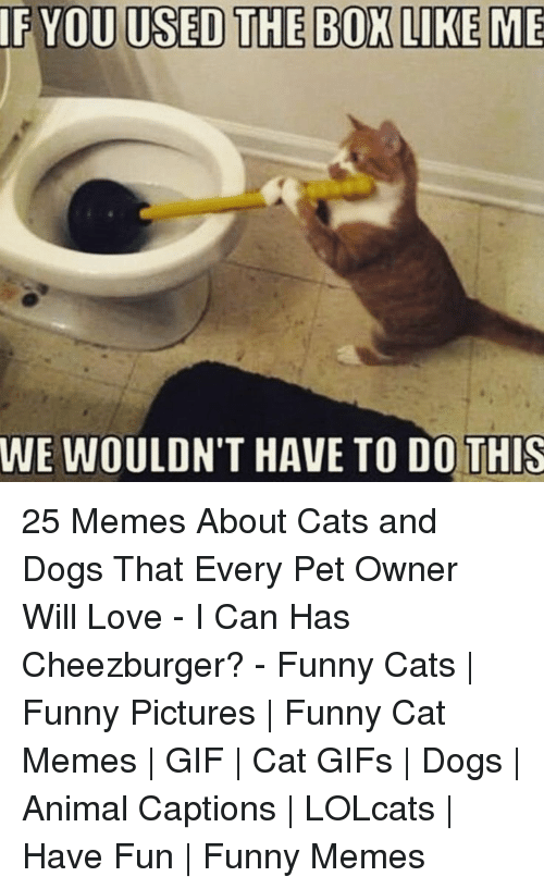 Cats, Dogs, and Funny: IF YOU USED THE BOX LIKE ME  WE WOULDN'T HAVE TO DO!THIS 25 Memes About Cats and Dogs That Every Pet Owner Will Love - I Can Has Cheezburger? - Funny Cats | Funny Pictures | Funny Cat Memes | GIF | Cat GIFs | Dogs | Animal Captions | LOLcats | Have Fun | Funny Memes
