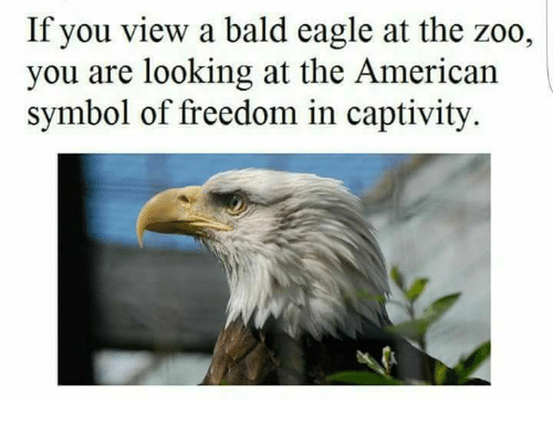 If You View A Bald Eagle At The Zoo You Are Looking At The American