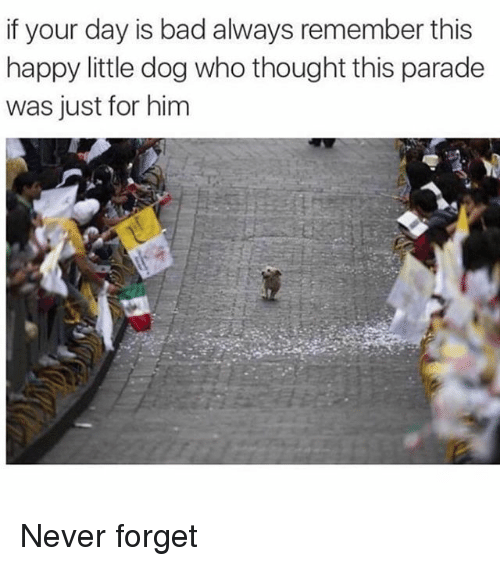 Bad, Happy, and Girl Memes: if your day is bad always remember this  happy little dog who thought this parade  was just for him Never forget