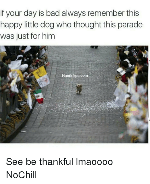 Bad, Dogs, and Funny: if your day is bad always remember this  happy little dog who thought this parade  was just for him  Hood clips.com See be thankful lmaoooo NoChill