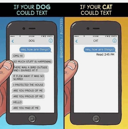 Dank, Hello, and Omg: IF YOUR DOG  COULD TEXT  IF YOUR CAT  COULD TEXT  3:15 AM  3:35 AM  DOG  CAT  Hey, how are things?  Hey, how are things?  Read 2:45 PM  OMG HI  SO MUCH STUFF IS HAPPENING  THERE WAS A BIRD OUTSIDE  AND I BARKED AT IT  IT FLEW AWAY IT WAS SO  SCARED  IPROTECTED THE HOUSE  ARE YOU PROUD OF ME  ARE YOU PROUD OF ME  HELLO  ARE YOU MAD AT ME