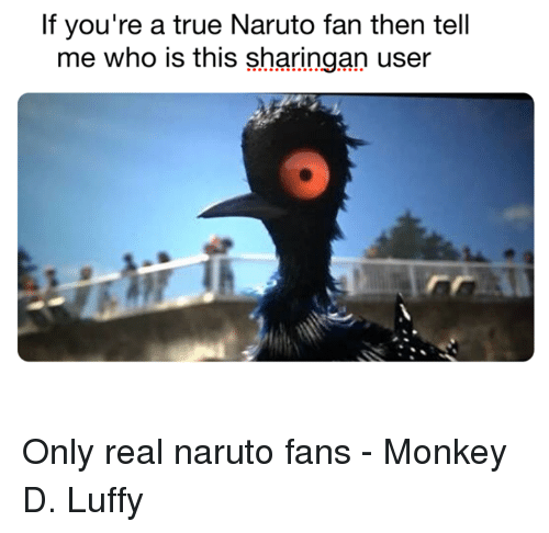 Memes, Naruto, and Monkey: If you're a true Naruto fan then tell  me who is this sharingan user Only real naruto fans - Monkey D. Luffy