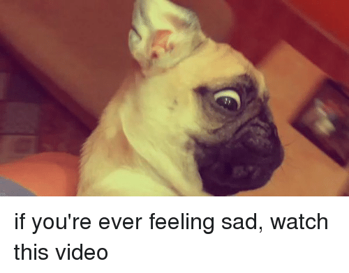 Image of: Baby Funny Videos And Video If Youre Ever Feeling Sad Watch Funny If Youre Ever Feeling Sad Watch This Video Funny Meme On Meme