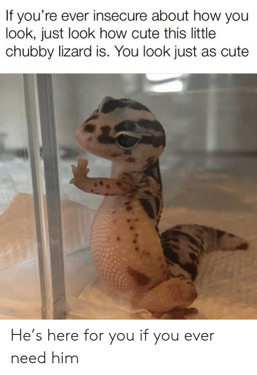 Cute, How, and Him: If you're ever insecure about how you  look, just look how cute this little  chubby lizard is. You look just as cute He's here for you if you ever need him