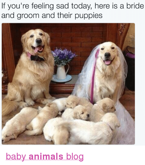 """Animals, Puppies, and Target: If you're feeling sad today, here is a bride  and groom and their puppies <p><a href=""""http://babyanimalgifs.tumblr.com/"""" target=""""_blank"""">baby <b>animals</b> blog</a></p>"""