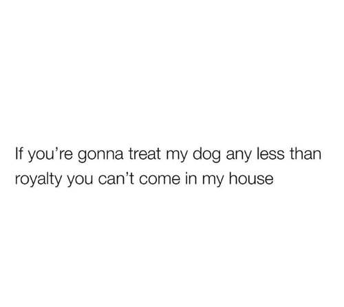 My House, House, and Dog: If you're gonna treat my dog any less than  royalty you can't come in my house