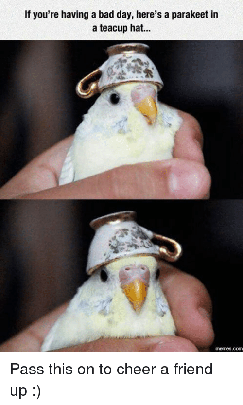 if youre having a bad day heres a parakeet in 16475671 ✅ 25 best memes about cheer a friend up cheer a friend up memes,Cheer Up Meme
