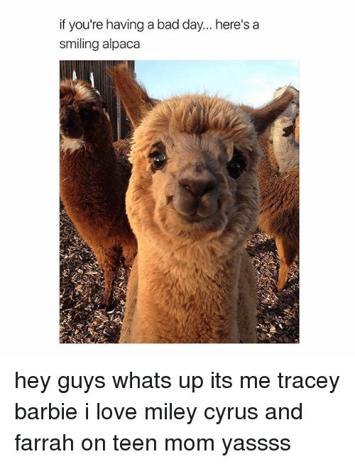 Bad, Bad Day, and Barbie: if you're having a bad day... here's a  smiling alpaca hey guys whats up its me tracey barbie i love miley cyrus and farrah on teen mom yassss