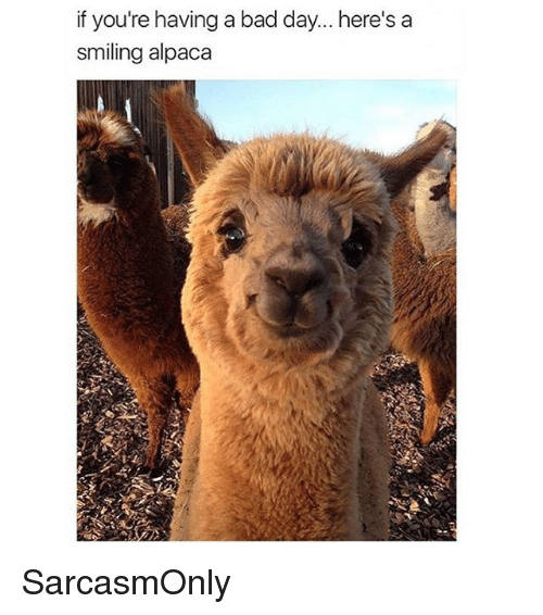 Bad, Bad Day, and Funny: if you're having a bad day... here's a  smiling alpaca SarcasmOnly