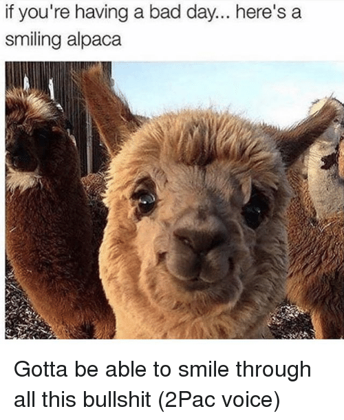 Bad, Bad Day, and Memes: if you're having a bad day... here's a  smiling alpaca Gotta be able to smile through all this bullshit (2Pac voice)