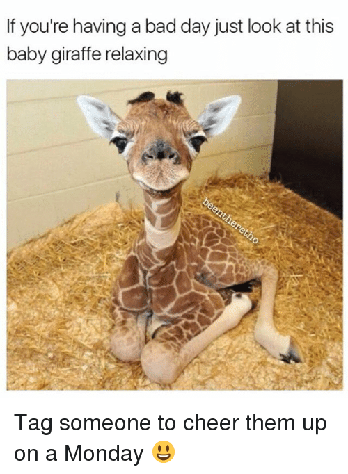 If Youre Having A Bad Day Just Look At This Baby Giraffe Relaxing