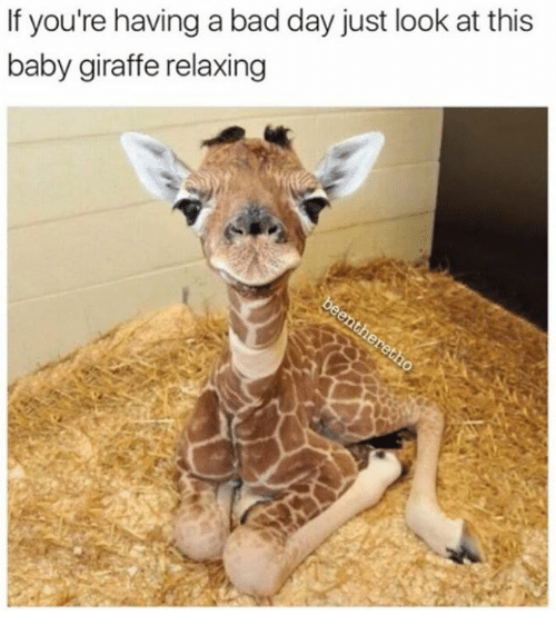 if youre having a bad day just look at this 13887791 ✅ 25 best memes about baby giraffe baby giraffe memes,Giraffe Meme