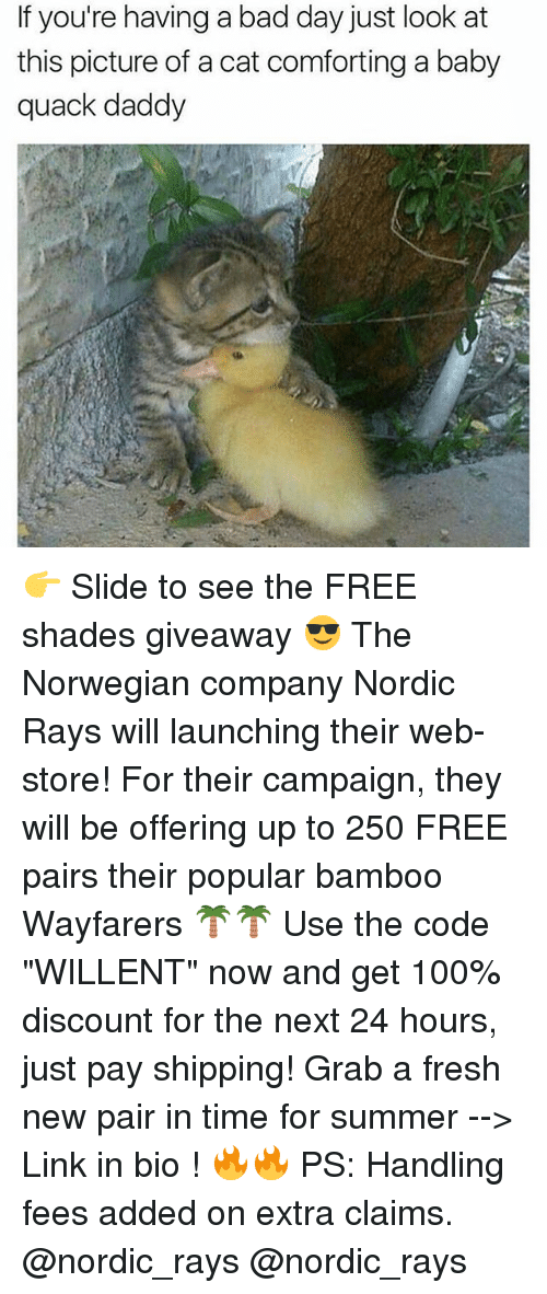 """Anaconda, Bad, and Bad Day: If you're having a bad day just look at  this picture of a cat comforting a baby  quack daddy 👉 Slide to see the FREE shades giveaway 😎 The Norwegian company Nordic Rays will launching their web-store! For their campaign, they will be offering up to 250 FREE pairs their popular bamboo Wayfarers 🌴🌴 Use the code """"WILLENT"""" now and get 100% discount for the next 24 hours, just pay shipping! Grab a fresh new pair in time for summer --> Link in bio ! 🔥🔥 PS: Handling fees added on extra claims. @nordic_rays @nordic_rays"""