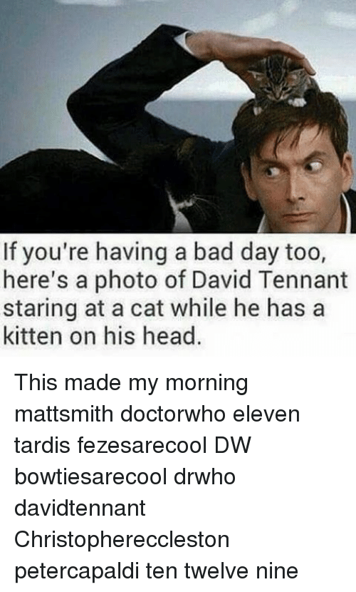 Bad, Bad Day, and Head: If you're having a bad day too,  here's a photo of David Tennant  staring at a cat while he has a  kitten on his head. This made my morning mattsmith doctorwho eleven tardis fezesarecool DW bowtiesarecool drwho davidtennant Christophereccleston petercapaldi ten twelve nine