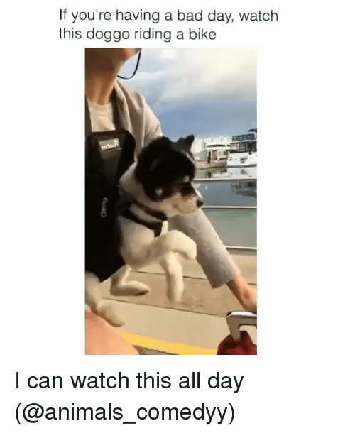 Animals, Bad, and Bad Day: If you're having a bad day, watch  this doggo riding a bike I can watch this all day (@animals_comedyy)