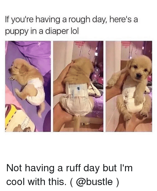 If Youre Having A Rough Day Heres A Puppy In A Diaper Lol Not