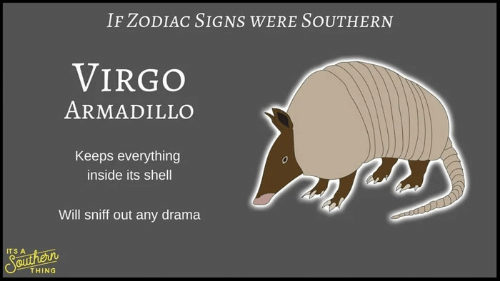 If Zodiac Signs Were Southern Virgo Armadillo Keeps Everything Inside Its Shell Will Sniff Out Any Drama Its A Sauther Thing Virgo Meme On Me Me